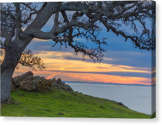 Contra Canvas Print - Big Oak Above Fog by Marc Crumpler