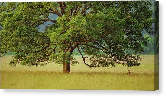Big Oak Canvas Print