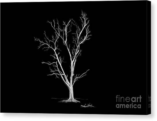 Big Old Leafless Tree Canvas Print