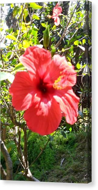 Big Red Canvas Print - Big Red Flower by Anamarija Marinovic