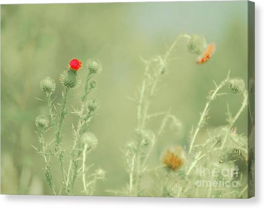 Big Red, Little Red Canvas Print
