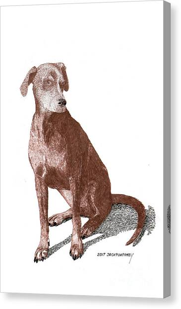 Canvas Print - Red A Big Weimaraner by Jack Pumphrey
