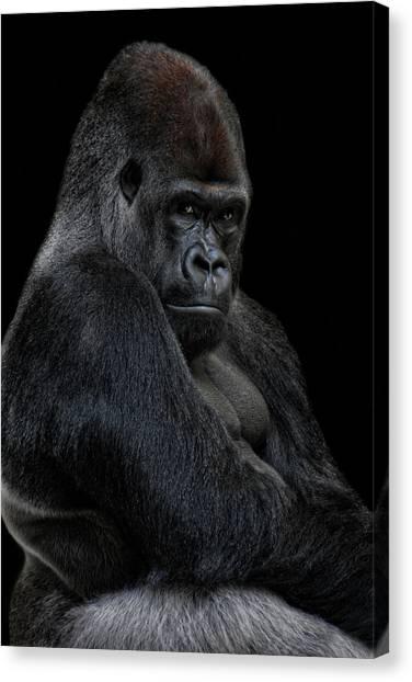 Gorillas Canvas Print - Big Silverback by Joachim G Pinkawa