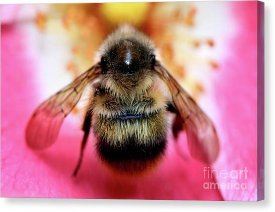 Big Time Bee Close Up Canvas Print by Terry Elniski