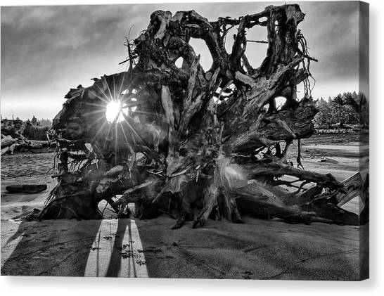 Big Tree On The Beach At Sunrise In Monochrome Canvas Print