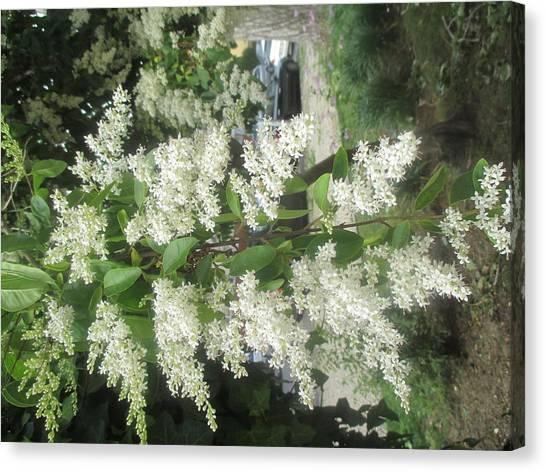 Wedding Canvas Print - Big White Flowers Looking Like A Wedding Arrangement by Anamarija Marinovic