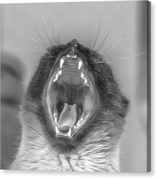 Big Yawn Canvas Print