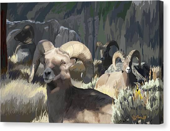 Bighorn Boys Canvas Print