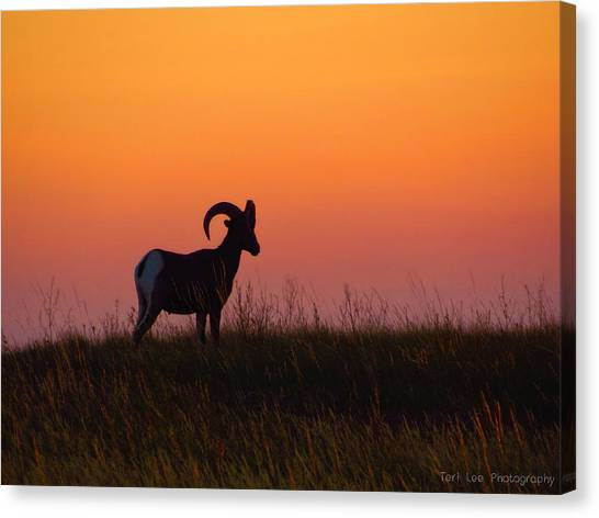 Bighorn Sunset Canvas Print