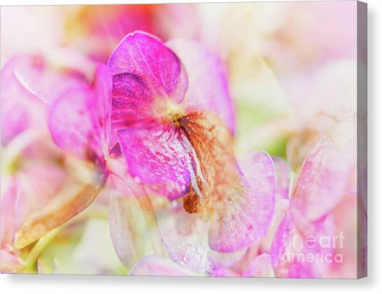 Canvas Print featuring the photograph Bigleaf Hydrangea Abstract by Nick Biemans