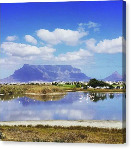 Flamingos Canvas Print - Bike Rides With The Family.... Great by Sharon Atkins