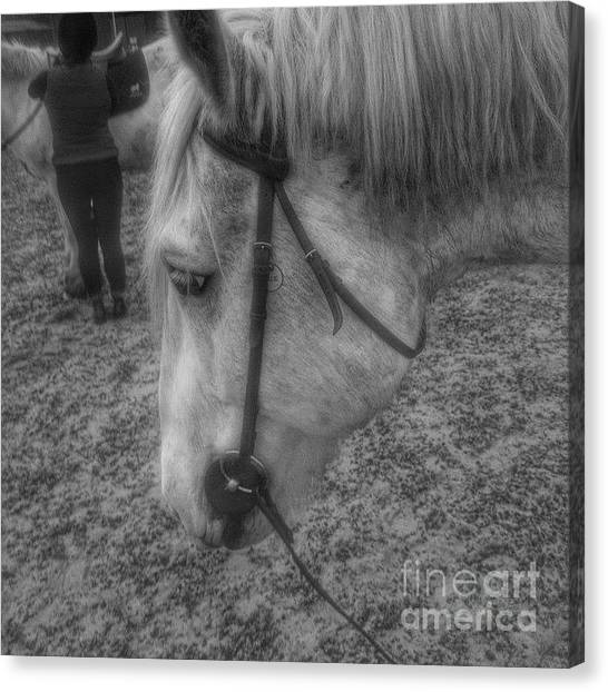 Horses Canvas Print - Billie After An Hours Riding.  #horses by Abbie Shores