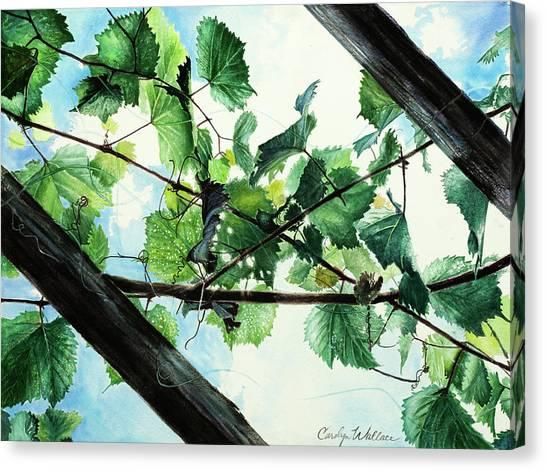 Biltmore Grapevines Overhead Canvas Print