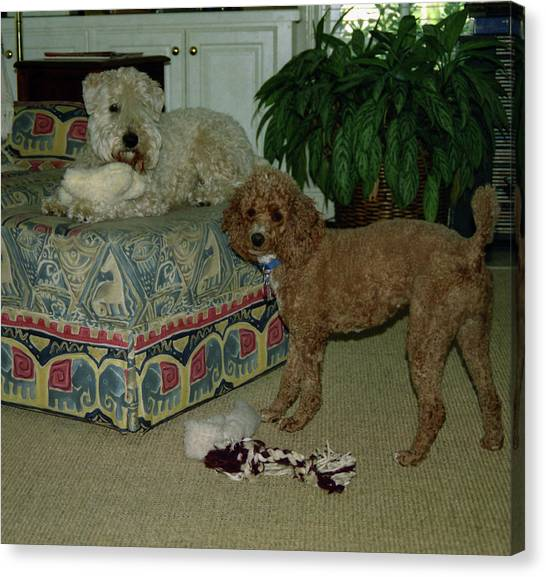 Canvas Print featuring the photograph Binkley And  Ginger by Samuel M Purvis III