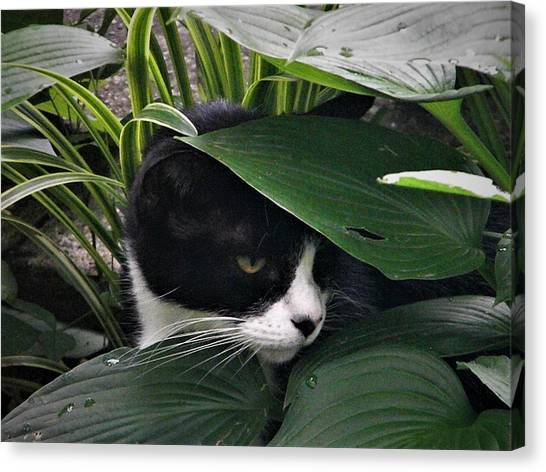 Binx Our Feral Cat Canvas Print