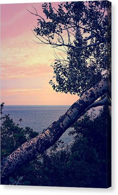 Birch At The Overlook Canvas Print