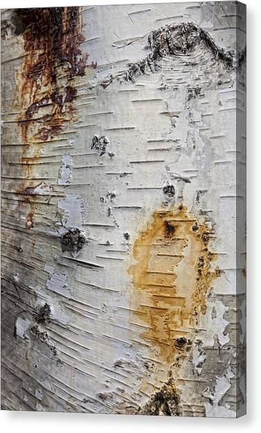 Birch Bark 2 Canvas Print