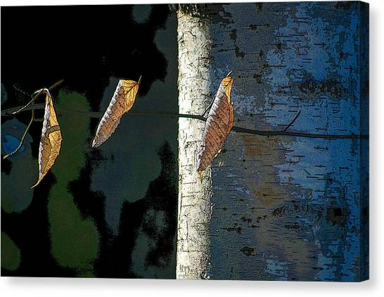Birch Canvas Print