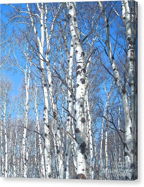 Birch Sky Canvas Print
