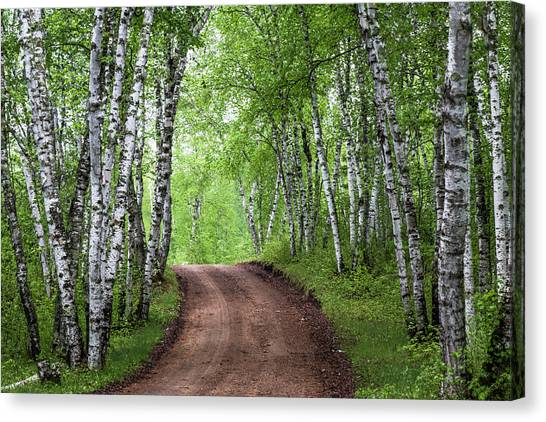 Canvas Print featuring the photograph Birch Tree Forest Path #3 by Patti Deters