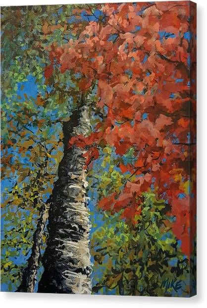 Birch Tree - Minister's Island Canvas Print