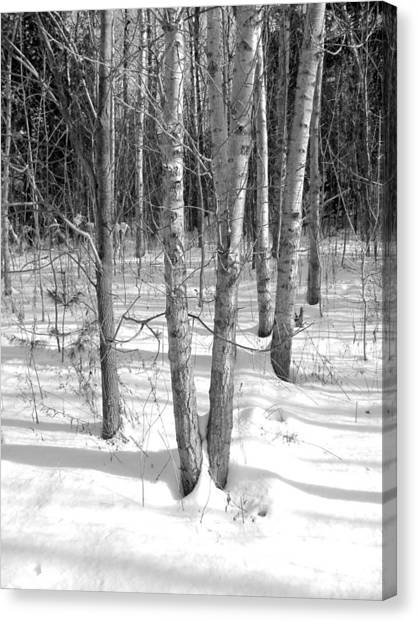Birch Trees Canvas Print by Douglas Pike