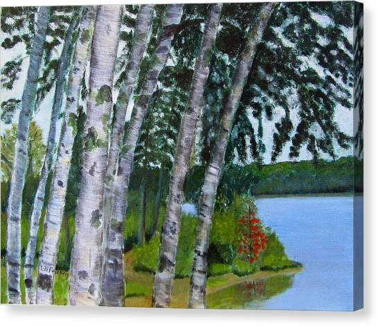 Birches At First Connecticut Lake Canvas Print