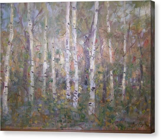 Birches. Canvas Print