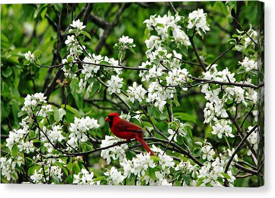 Bird And Blossoms Canvas Print