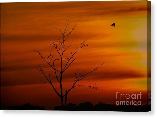 Bird At Play Canvas Print