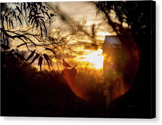 Fine Art Canvas Print - Bird At Sunset Color by Fine Art