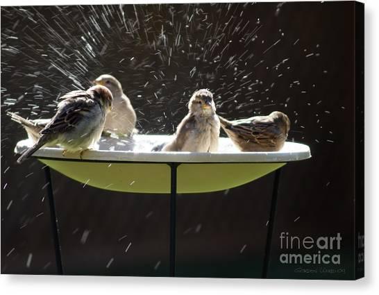 Bird Bathing Spree Canvas Print by Gordon Wood