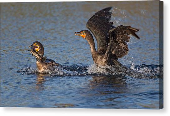 Fighting Canvas Print - Bird Fight !!! by Alfred Forns