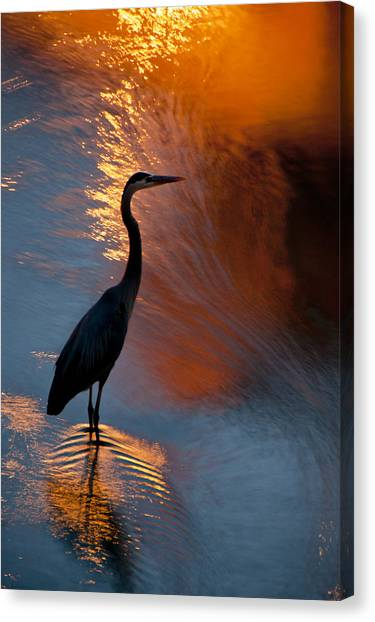 Canvas Print featuring the photograph Bird Fishing At Sundown by Williams-Cairns Photography LLC