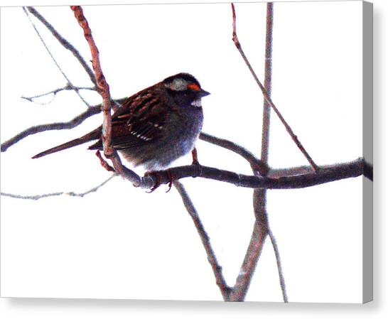 Canvas Print featuring the photograph Bird In A Winter Bush. by Roger Bester