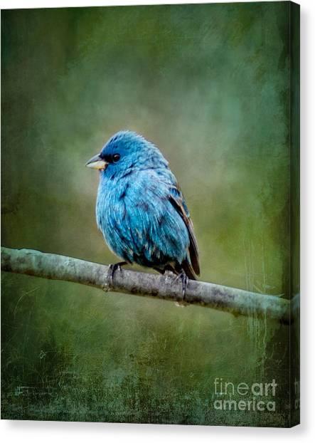 Bird In Blue Indigo Bunting Ginkelmier Inspired Canvas Print