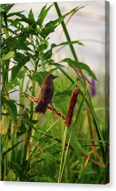 Bird In Cattails Canvas Print