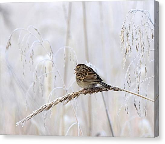 Bird In First Frost Canvas Print