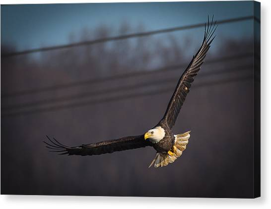 Bird In Flight  Canvas Print