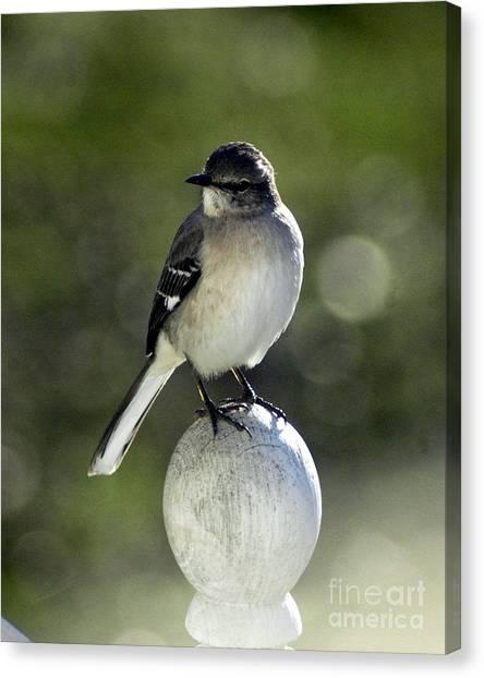 Bird Canvas Print by Lynn Reid