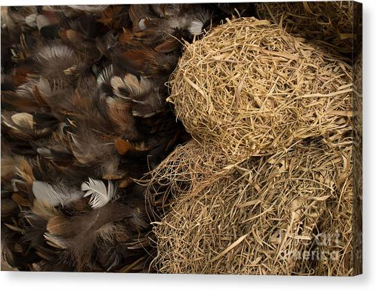 Bird Nest And Feathers Canvas Print