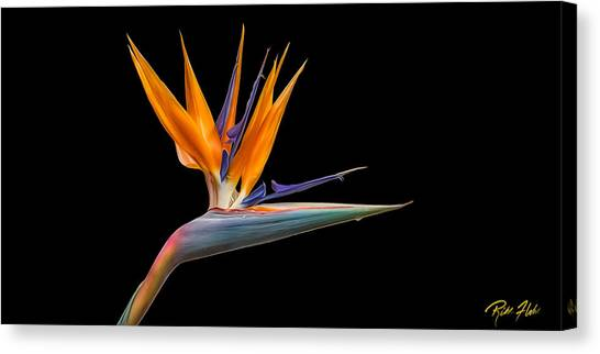 Bird Of Paradise Flower On Black Canvas Print