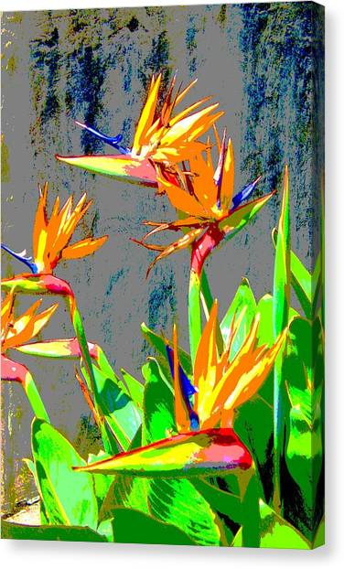 Bird Of Paradise Canvas Print by Scott K Wimer