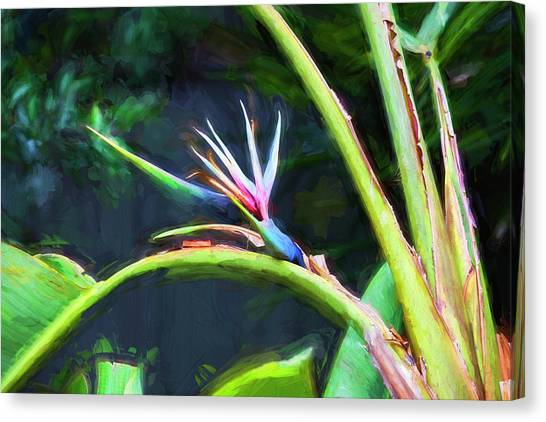Bird Of Paradise Strelitzia Reginae 003 Canvas Print