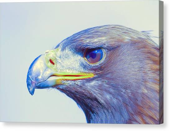 Eagle Scout Canvas Print - Bird Of Prey - Eagle 1 by Celestial Images