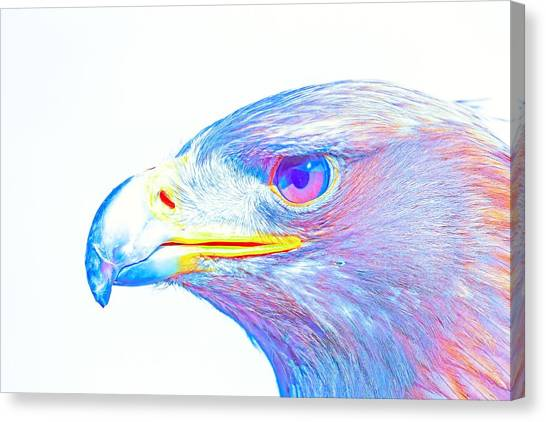 Eagle Scout Canvas Print - Bird Of Prey - Eagle 3 by Celestial Images