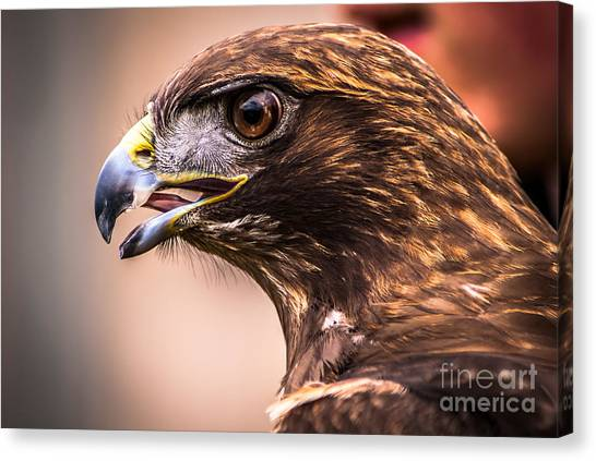 Bird Of Prey Profile Canvas Print