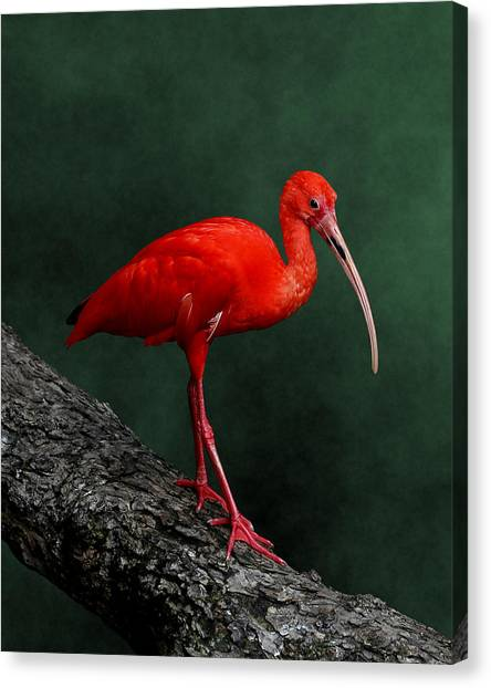 Bird On A Catwalk Canvas Print