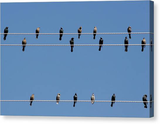 Animal Canvas Print - Bird On A Wire by Christine Till