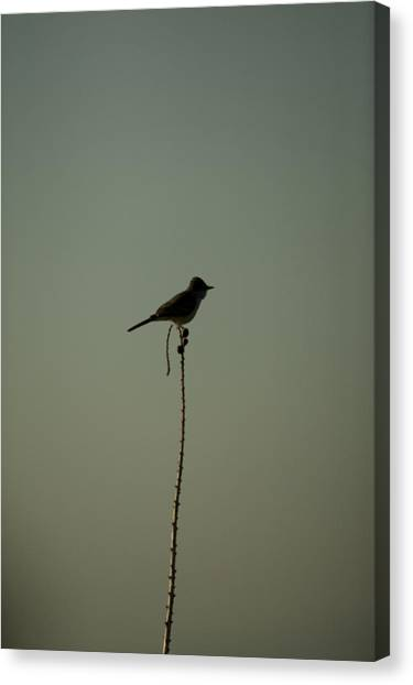 Bird On Lechuguilla Canvas Print by Clyde Replogle